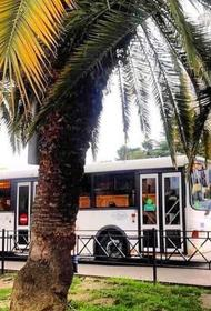 В некоторых автобусах Сочи подорожает проезд