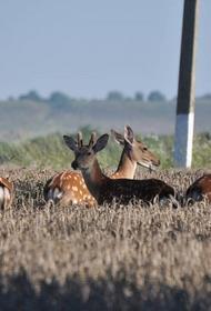 На Кубани создан природный парк
