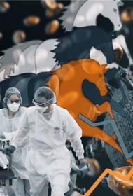 Эксперты РАНХиГС считают, что в России ни один госресурс не предоставляет полной информации о пандемии COVID-19