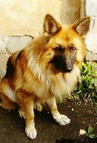 В Челябинске прекратил существование питомник служебных собак
