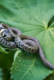 Змею поймали на балконе жилого дома в Подмосковье
