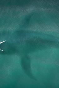 В Австралии акула напала на подростка