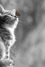 Упавшего в глубокий колодец котенка вытащили спасатели в подмосковном Можайске
