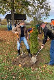 В Апшеронском районе высажено около 3,5 тысяч сеянцев дуба