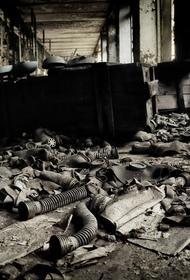 В зоне отчуждения Чернобыльской АЭС задержали грибников
