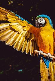 В Австралии домашний попугай не дал мужчине из Брисбена погибнуть в огне