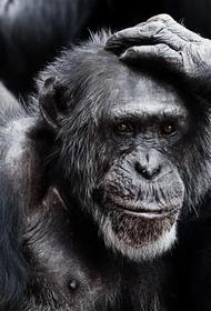 Ученые узнали, какие звуки любят обезьяны