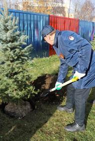 У Ледового катка ЦСКА высадили ели в честь ветеранов Великой Отечественной войны