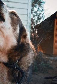 В Бурятии в посёлке Заиграево собака погубила девочку