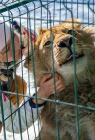 Стали известны подробности перелета львенка Симбы и леопарда Евы