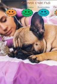 Спать в одной кровати с животными - плюсы и минусы