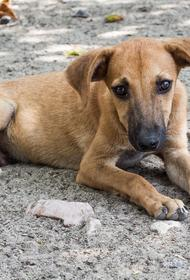 В Новороссийске пройдёт выставка с раздачей бездомных животных