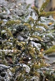 Власти Ульяновской области отменили торги на закупку новогодней елки