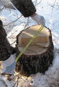 В Хабаровском крае незаконно вырубили лес на 210 млн рублей