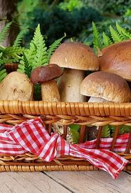 Правительство России отнесло грибы к сельхозпродукции