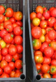 В Хабаровском крае цена кг томатов достигла 300 рублей
