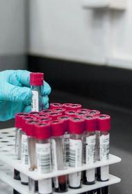 В Индии приступили к разработке назальной вакцины против коронавируса
