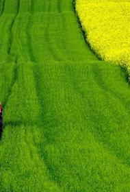 Олигархи забрали себе 70 процентов пахотных земель планеты