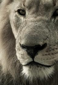 В крымском сафари-парке продолжают гибнуть животные