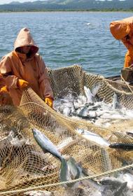 Депутаты ЗСК предложили меры по восстановлению рыбной отрасли Кубани