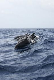 Около сотни дельфинов выбросились на берег в Новой Зеландии