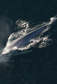 В Таиланде ученые обнаружили недалеко от Бангкока скелет 12-метрового кита возрастом примерно 5000 лет