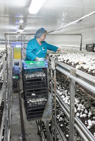 В России установлен грибной рекорд