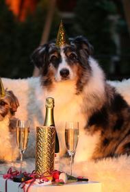 Роспотребнадзор дал рекомендации по празднованию Нового года