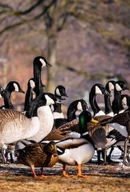 В Минсельхозе Франции сообщили о вспышке птичьего гриппа
