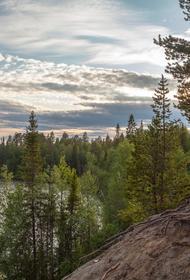 Уникальные деревья вырубают на корню. В Карелии Минприроды продало бизнесменам древние леса вепсов