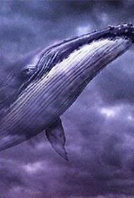 Существует ли на самом деле, таинственный океанский монстр - 52-герцевый кит?