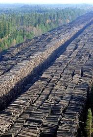В Красноярском крае проводится масштабная проверка по фактам незаконной вырубки леса