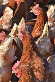 Вспышку птичьего гриппа зарегистрировали в десяти префектурах Японии