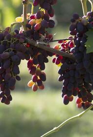 Власти Украины отреагировали на продажу в России крымского винзавода «Массандра»