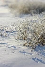 Суровая российская реальность – полоть траву под снегом в -25 и все это за 500 рублей. Но и за такую работу говорят «спасибо»
