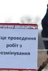 В Одессе первоклассница решила «заминировать» школу, чтобы поиграть с котенком
