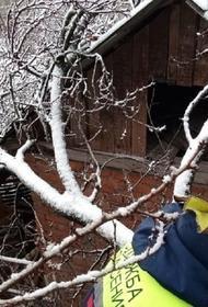 Из-за снегопада в Новороссийске рухнуло дерево