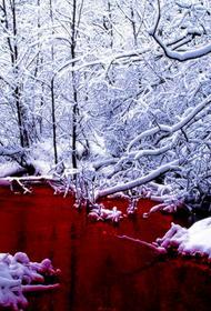 «Кровавая река» течёт в Сегежском районе Карелии. Местные говорят, что форелевое хозяйство сбрасывает туда рыбные отходы