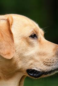 В Красноярске собака спасла свою хозяйку от маньяка