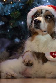 Рождество: время чудес