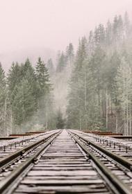 Скоростной электропоезд «Ласточка» начал курсировать между Петербургом и Тихвином