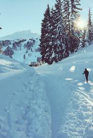 В Челябинской области ищут пожилого лыжника