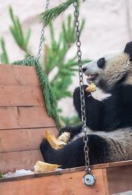 В Московском зоопарке рассказали, как животные провели новогоднюю ночь