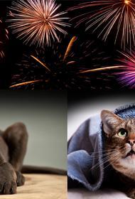 Не все птицы и городские животные переживут громкие новогодние праздники