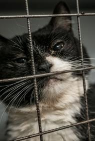 В подвале челябинского дома замуровали кошек
