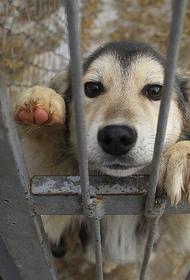 В Хабаровске не хотят ловить бездомных животных и за 7 млн руб.