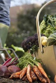 Законопроект о сельхозпродукции открывает аграриям Кубани новые возможности