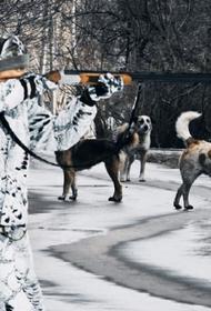В Бурятии участились случаи нападения бездомных собак