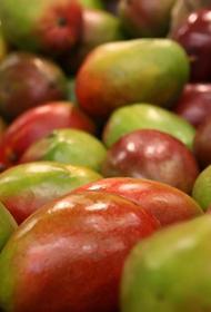 Американские ученые считают, что употребление маленьких порций манго снижает уровень сахара в крови