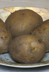 В российских магазинах может появиться картофель «экономкласса»